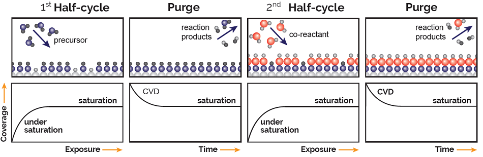 A schematic representation of the various steps in an ALD cycle consisting of two half-reactions. The exposures in the first half-cycle (precursor) and second half-cycle (co-reactant) are self-limiting such that the process stops when all available surface sites are occupied. The two half-cycles are separated by purge steps. The lower panels show the resulting coverage, or growth per cycle, as a function of exposure or time for that particular step. For sufficient exposure, saturated growth is obtained, while insufficient exposure results in incomplete saturation. For insufficient purging, a CVD component from mixing of the precursor and co-reactant is obtained.