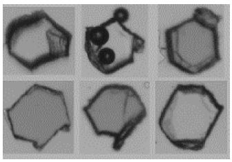 Why Dynamic Imaging Analysis Should Be Included in Particle Shape Evaluations
