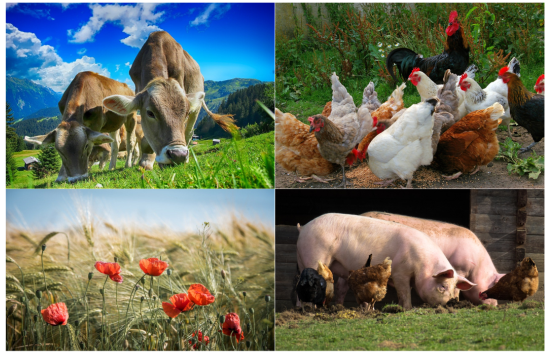 Livestock and Agricultural Research with PTR-MS