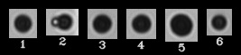 (Left) Printer toner particles imaged by the FlowCam. Particle ID shown beneath each image correlates with data in Table 1.