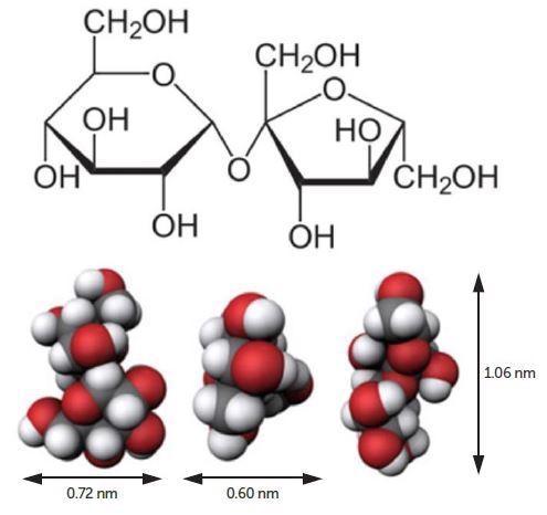 Sucrose molecule.