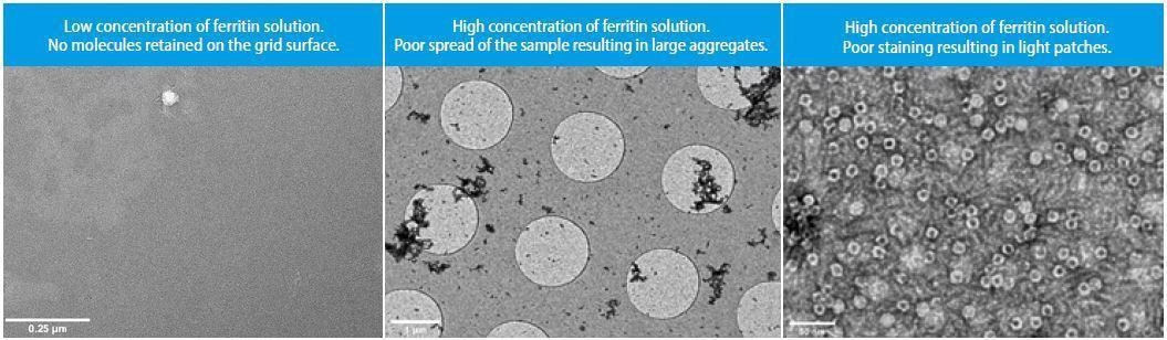 The effect of non-glow discharged carbon support TEM grid on retention, spread and staining quality of native ferritin sample solution. Low (6x10-4µg/mL)and high(6x10-2µg/mL) concentrations of the protein were used.