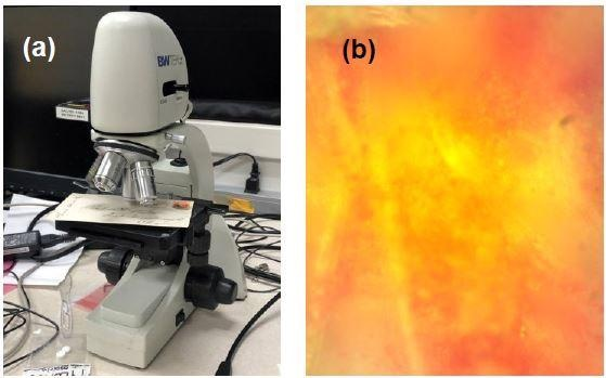 (a) Ink samples on the Raman video microscope stage and (b) image of area 2 red ink at 50x magnification.