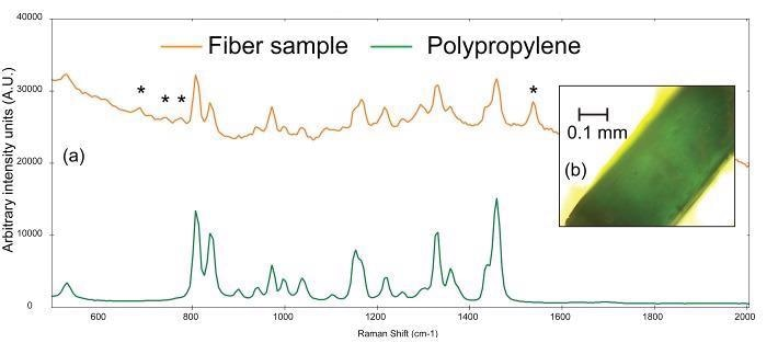 (a) Raman spectra of a teal fiber (orange) compared to a reference spectrum of polypropylene (green) and (b) photomicrograph of teal fiber. The asterisks denote peaks that can be attributed to the colorant used in the plastic.