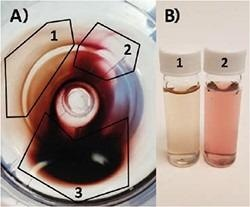 A) Top-down view of centrifuge tube containing gold nanoparticle pellet. Particles partially separate according to size and particle geometry: 1) Very high shape purity nanorod population. 2) Primarily nanosphere population. 3) Mix of both populations. B) Photo of (1) highly purified gold nanorods and (2) primarily spheres from pellet in A).