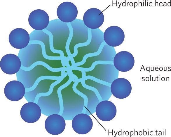 Self-Assembled Surfactant Micelles: Analyzing Their Size