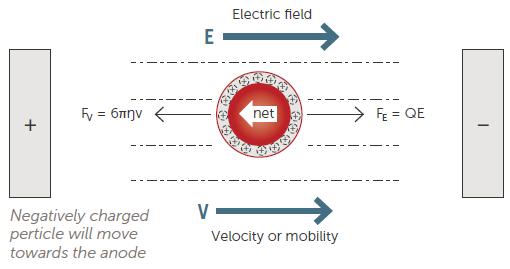 Electrophoretic Light Scattering (ELS) technique