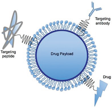 Surfaced modified nanoparticle for drug targeting and delivery
