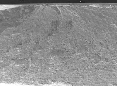SEM image of a fracture origin (top).