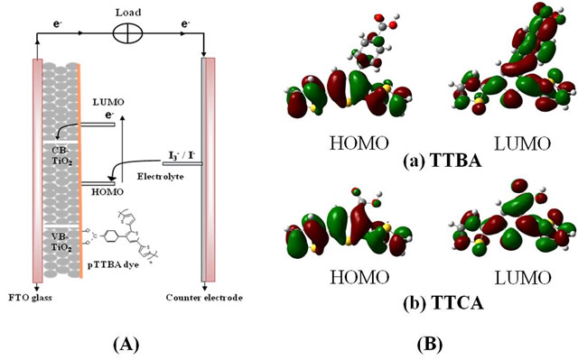 (A) Schematic of a solar cell composed of the pTTBA dye polymerized on TiO2 and I3-/I- electrolyte. (B) Frontier molecular orbital of the HOMO and LUMO levels of (a) TTBA, and (b) TTCA