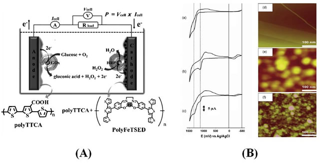 (A) Schematic diagram of a biofuel cell with a conducting polymer catalyst. (B) CVs for electropolymerization using (a) TTCA, (b) FeTSED, and (C) TTCA + FeTSED (1:1 mole ratio) monomers. AFM images for (d) bare, (e) polyTTCA, and (f) poly(TTCA–FeTSED) coated on the highly ordered pyrolytic graphite electrodes.