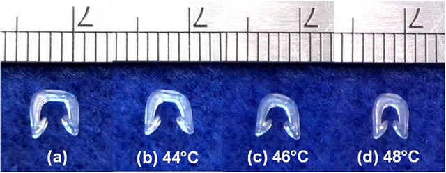 Biodegradable PLA surgical staple with self-tightening function upon heating.