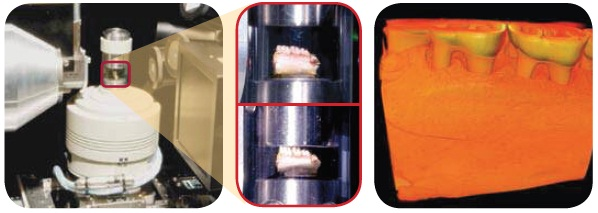 Rat mandible study: In situ compression study