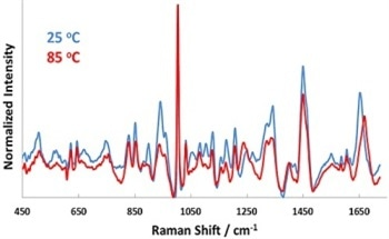 Using Dynamic Light Scattering and Raman Spectroscopy to Estimate BSA Aggregation Kinetics