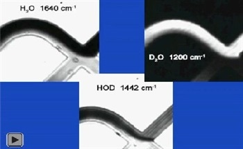 Observing Dynamic Proton-Deuterium Exchange in Microfluidic Systems