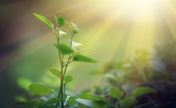 Artificial Photosynthetic Systems