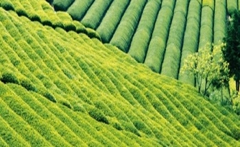 Active Ingredients in Pharmaceuticals and Agrochemicals