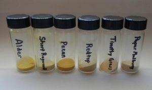 Determining Particle Shape of Pollen - Case Study