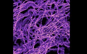 Creating and Manipulating Vortex-Antivortex Pairs in Ferroelectric Materials Using Piezoresponse Force Microscopy (PFM)