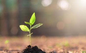 How is Elemental Analysis used in Plant Research Applications?