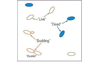The Importance of Consistent Monitoring of Yeast Viability and Growth in Fermentation Processes