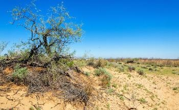 How Chemical Pre-Treatments in Particle Size Analysis Impact Wind Erosion Modeling