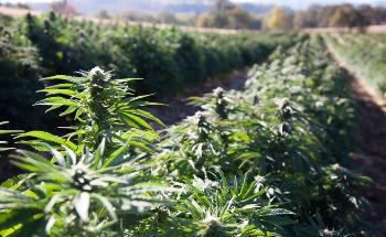 NMR Spectroscopy Can be Used for Quantitative Chemical Composition Analysis of Pyrolysis Liquids from Industrial Hemp