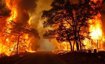 Study Shows Free Radicals in Wildfire Charcoals Persist for A Very Long Time