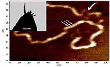 Imaging DNA-Based Materials Using AFM and Scanning Probe Microscopy