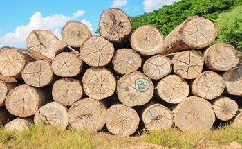 An Alternative To Hardwoods