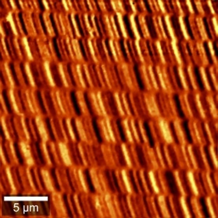Magnetic Force Measurement of a hard drive disk. The measurements were performed using AC mode technique with magnetic tips.