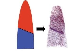 Atom Probe Assist for Grain Boundary Segregation Analysis