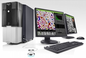 Automated Analysis of Pores in SEM Images