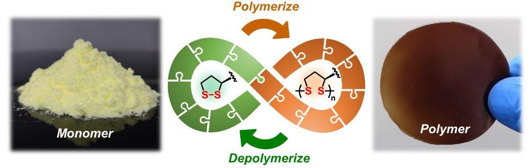 Scientists from the University of Groningen (The Netherlands) and the East China University of Science and Technology (ECUST) in Shanghai produced different polymers from lipoic acid, a natural molecule. These polymers are easily depolymerized under mild conditions. Some 87% of the monomers can be recovered in their pure form and re-used to make new polymers of virgin quality.