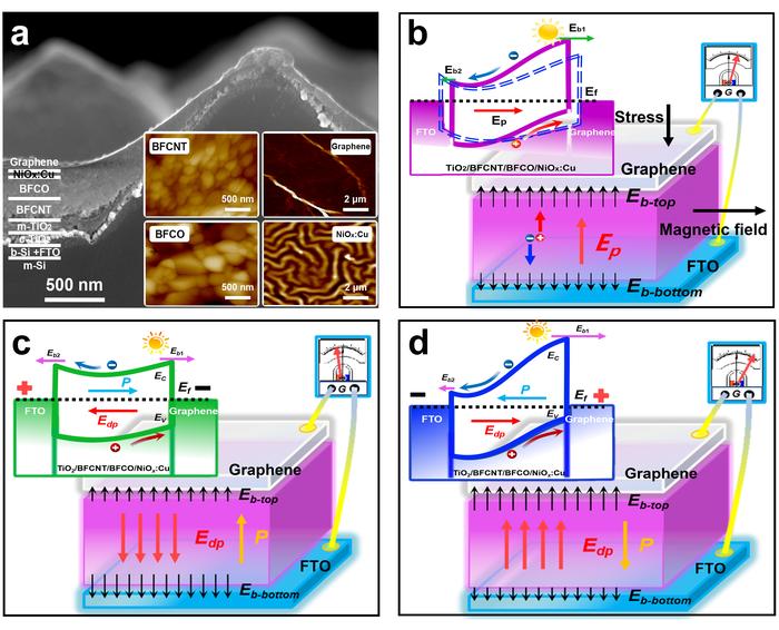 Multiferroic Materials to Enhance Solar Cell Efficiency