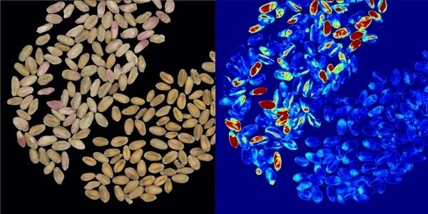 Detecting Crop Disease with Multispectral Imaging