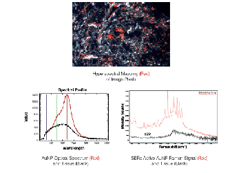 More Powerful Nanoparticle Analysis with Raman Spectroscopy, Hyperspectral Imaging and Enhanced Darkfield Illumination on the Same Microscope Platform