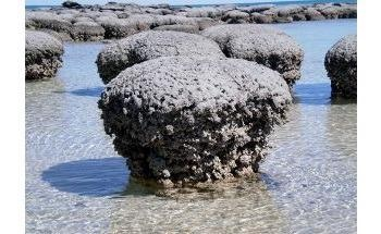 Stromatolites - The Fossils of Earth's Earliest Lifeforms - May Owe Their Existence to Viruses