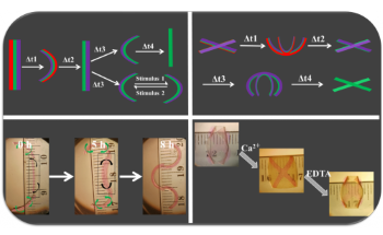 New 4D Hydrogels can Change Shape in Response to Stimuli