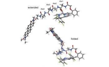 Researchers Observe Picosecond Charge Transfer in Peptides