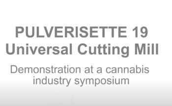Sample preparation of cannabis plants