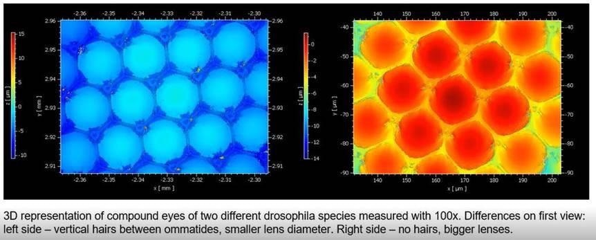 The One-Minute-Way to fly's eyes morphology - Optical Profilometry provides topography of Drosophila's compound eye