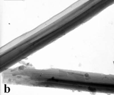 """AZojomo - The """"AZo Journal of Materials Online"""" TEM images of the obtained alumina membrane with SBA-15 nanorods inside"""