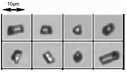 Example of glass rod particles measured on the FPIA- 3000. Note consistent alignment even of the smallest and lowest aspect ratio particles.