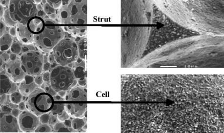 AZoM - Metals, ceramics, polymers and composites : Ceramic Foams – micrograph of a ceramic foam