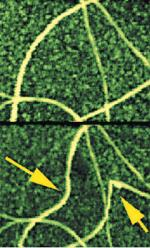 AFM in-plane nanomanipulation uses the AFM probe to image, manipulate nanometer-scale objects (carbon nanotubes), and image again to see the results