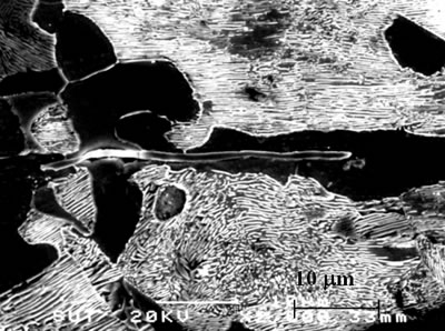 "AZojomo - The ""AZo Journal of Materials Online"" Scanning micrograph of  sulfide inclusions detected in workpiece W3."