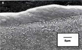 AZoM - Metals, Ceramics, Polymer and Composites : Micrograph of the steel roll surface after texturing using Electrical Discharge Machining and Surface Alloying.
