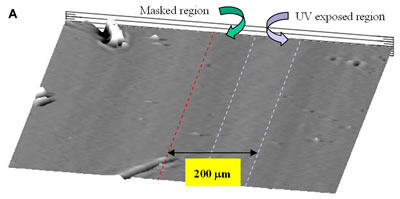 AZoJoMO – AZoM Journal of Materials Online - Pattern mapping of photoinduced PVCi film revealed by the surface profiler. (a) The periodical striped patterns (100 mm UV exposed and masked regions) of PVCi film in the horizontal direction;