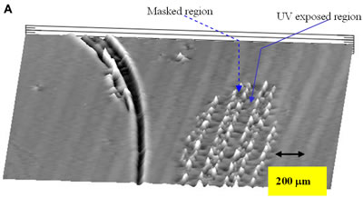 AZoJoMO – AZoM Journal of Materials Online - 3-D surface height pattern mapping of the LC multilayers formed by evaporation on photoinduced PVCi film revealed by the surface profiler for 2 hours 5CB evaporation. Vertical height information: » 0.5 nm for UV exposed region and 1.5 – 4.5 nm for the masked region. A burrow in the left side of the pattern mapping is a mechanical damage of the film. (a) The periodical striped patterns (100 mm UV exposed and masked regions) of LC multilayers in the horizontal direction;